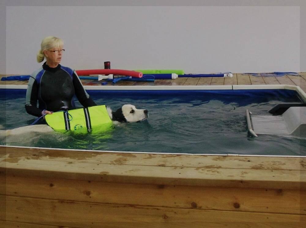 Diy Dog Therapy Pool Diy Campbellandkellarteam