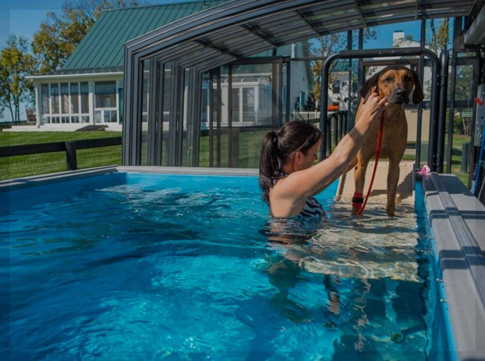 Commercial Swimming Pools Dog Water Therapy Dog